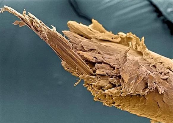 Mikroskop altında çekilmiş bir insan saçı