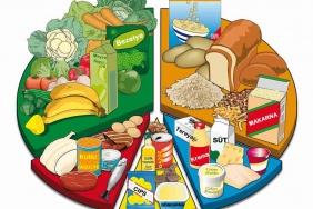 besin-grupları